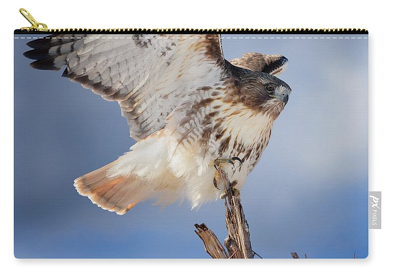 Red Tail Hawk Carry-all Pouch featuring the photograph Red Tail Hawk Perch by Bill Wakeley