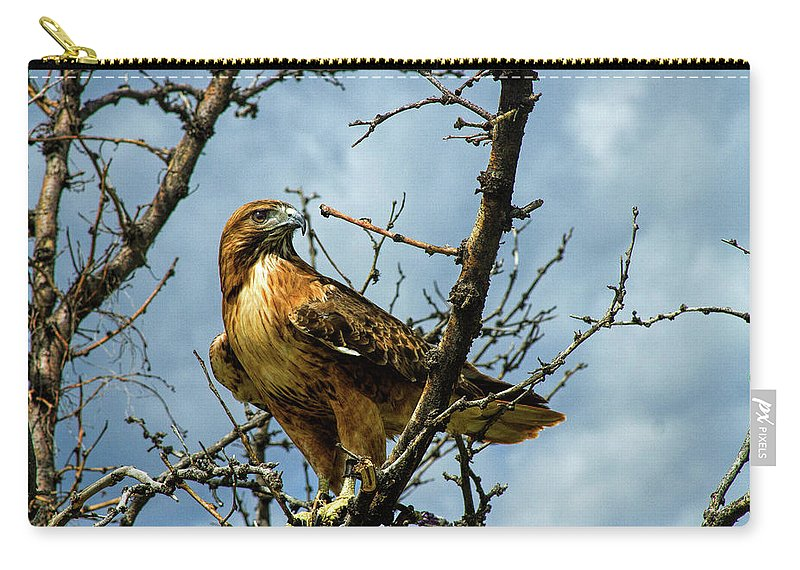 Hawk Carry-all Pouch featuring the photograph Red-Tailed Hawk by Alana Thrower
