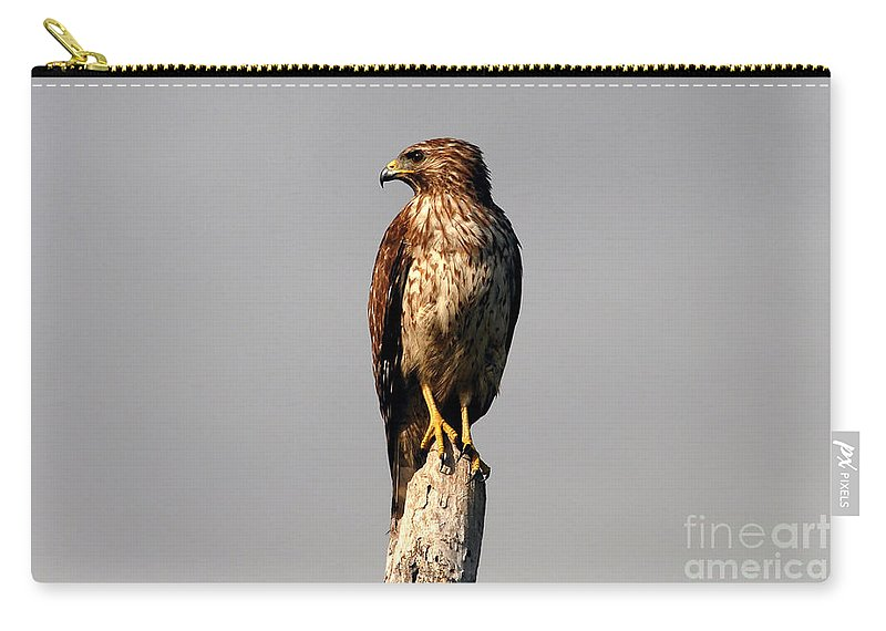 Red Tailed Hawk Carry-all Pouch featuring the photograph Red Tailed Hawk by David Lee Thompson