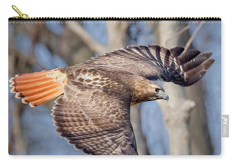 Redtail Hawk Carry-all Pouch featuring the photograph Red Tailed Hawk Flying by Bill Wakeley