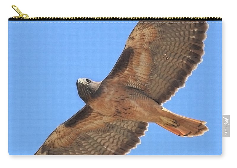 Red Tail Hawk Carry-all Pouch featuring the photograph Red Tailed Hawk In Flight by Wingsdomain Art and Photography