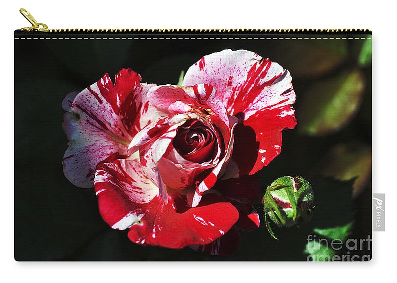 Clay Carry-all Pouch featuring the photograph Red Verigated Rose by Clayton Bruster