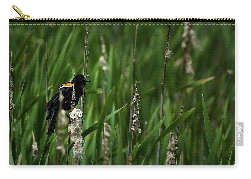 Red-winged Black Bird Carry-all Pouch featuring the photograph Red-winged Blackbird Calling by Onyonet Photo Studios