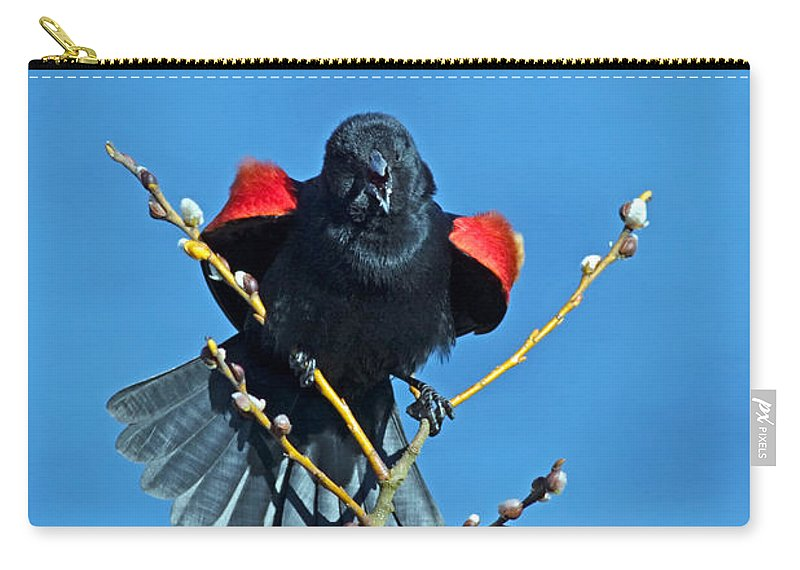 Red-winged Blackbird Carry-all Pouch featuring the photograph Red-winged Blackbird by Randall Ingalls