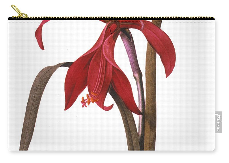 1833 Carry-all Pouch featuring the photograph Redout�: St. James Lily by Granger