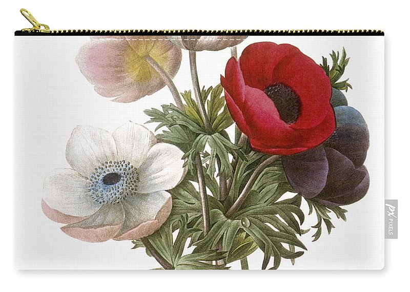 1833 Carry-all Pouch featuring the photograph Redoute: Anemone, 1833 by Granger