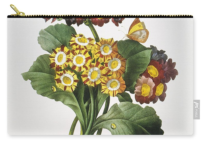 1833 Carry-all Pouch featuring the photograph Redoute: Auricula, 1833 by Granger