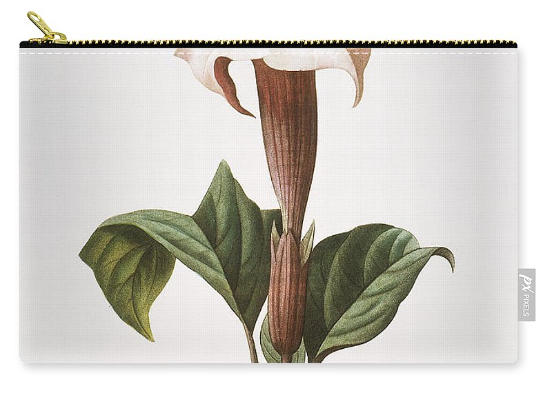 1833 Carry-all Pouch featuring the photograph Redoute: Datura, 1833 by Granger