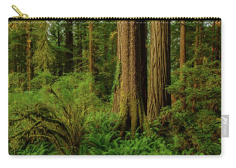 Charlie Choc Carry-all Pouch featuring the photograph Redwoods And Ferns by Charlie Choc
