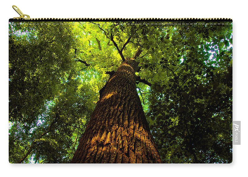 Redwood Forest Carry-all Pouch featuring the painting Redwoods by David Lee Thompson