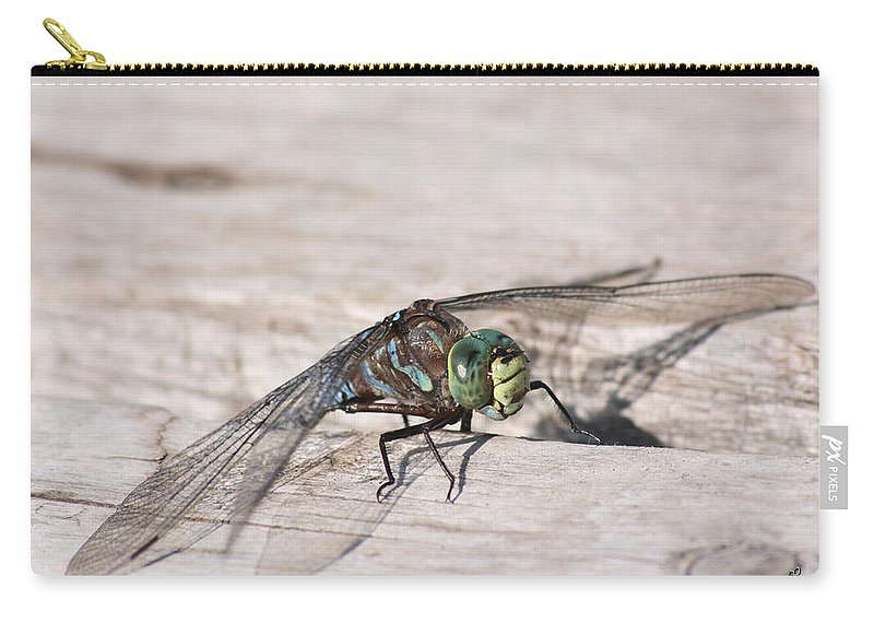 Dragonfly Nature Bug Flying Insect Wings Eyes Colorful Creature Carry-all Pouch featuring the photograph Rescued Dragonfly by Andrea Lawrence