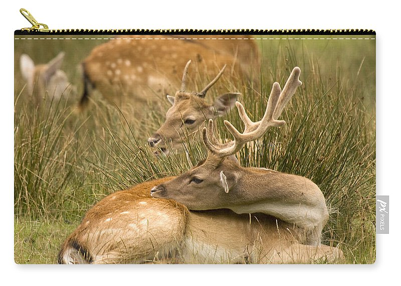 Fallow Deer Carry-all Pouch featuring the photograph Rest Time by Angel Ciesniarska
