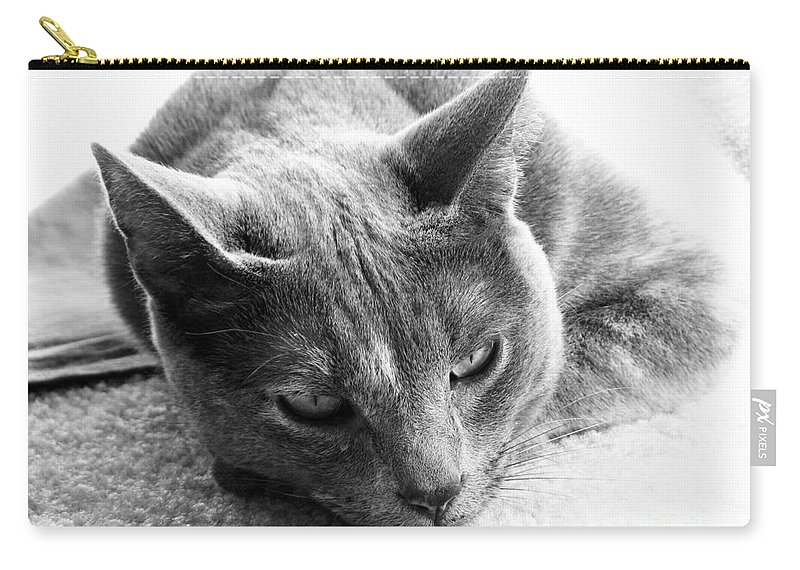 Cats Carry-all Pouch featuring the photograph Resting by Amanda Barcon