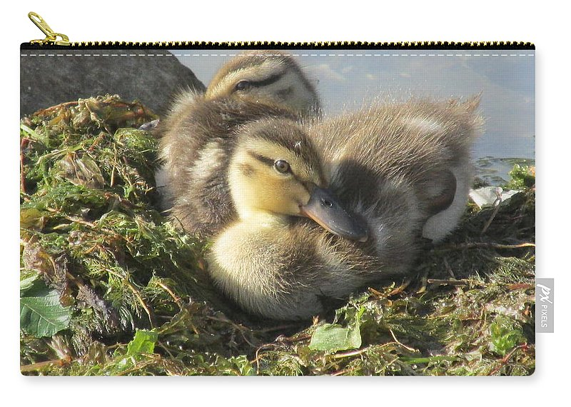 Ducklings Carry-all Pouch featuring the photograph Resting On The Lake Shore. by Mike Homblette