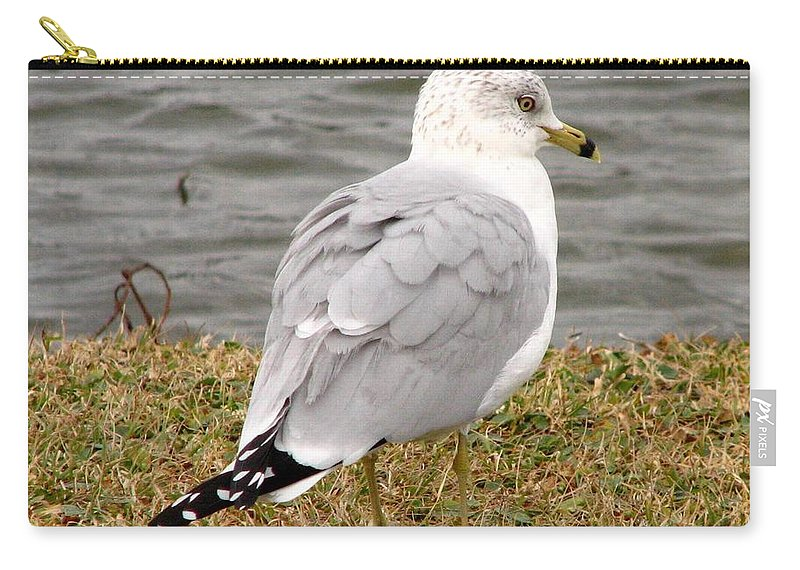 Gull Carry-all Pouch featuring the photograph Ring Billed Gull by J M Farris Photography