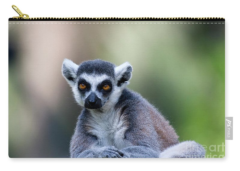 Ring-tailed Carry-all Pouch featuring the photograph Ring-tailed Lemur by Ofer Zilberstein