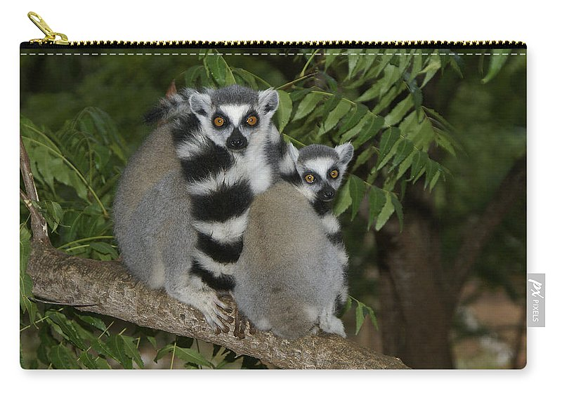 Madagascar Carry-all Pouch featuring the photograph Ring-tailed Lemurs by Michele Burgess