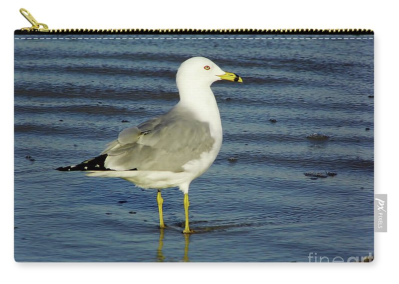 Birds Carry-all Pouch featuring the photograph Ringed Billed Sea Gull by D Hackett