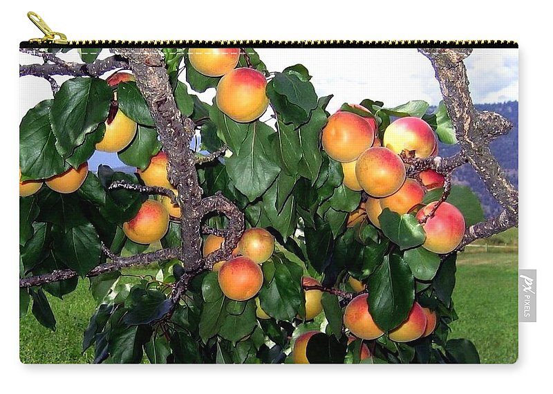 Apricots Carry-all Pouch featuring the photograph Ripe Apricots by Will Borden