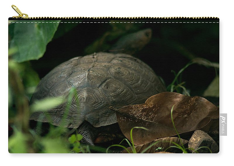 River Turtle Carry-all Pouch featuring the photograph River Turtle 2 by Totto Ponce