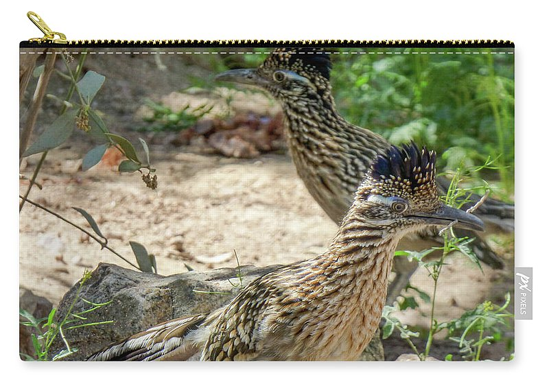 #orcinusfotograffy #arizona #phoenix #zoo #roadrunner Carry-all Pouch featuring the photograph Roadrunner Pair by Kimo Fernandez