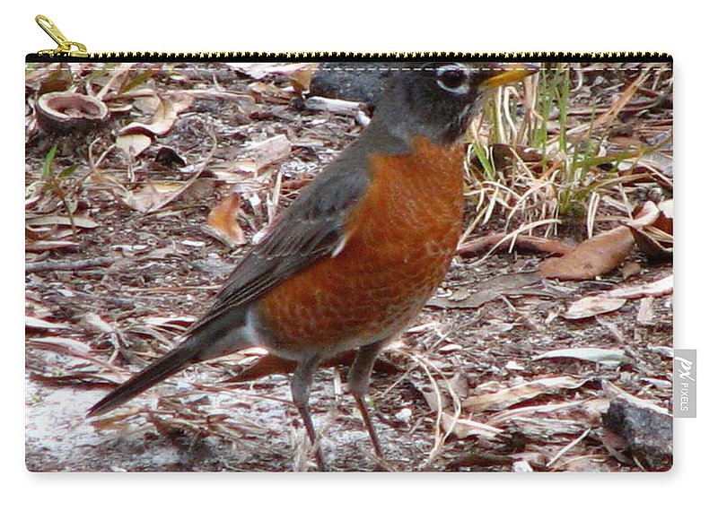 Robin Carry-all Pouch featuring the photograph Robin by J M Farris Photography