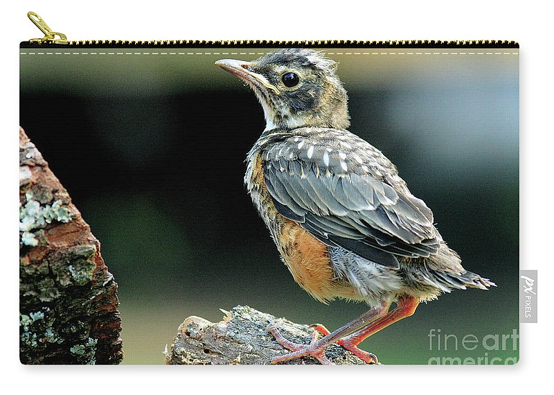 Carry-all Pouch featuring the photograph Rockin Robin by Douglas Stucky