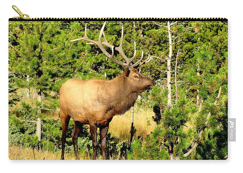 Elk Carry-all Pouch featuring the photograph Rocky Mountain Elk by Marilyn Smith