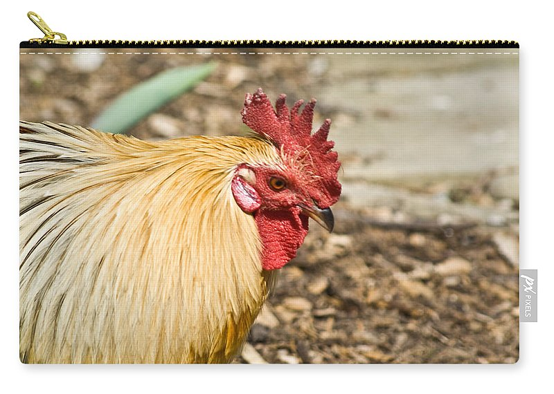 Rooster Carry-all Pouch featuring the photograph Rooster 1 by Douglas Barnett