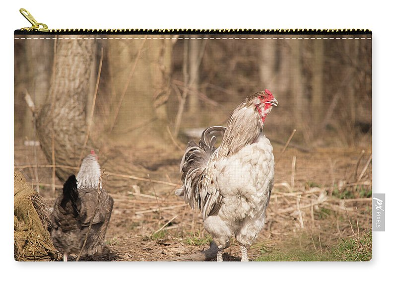Rooster Carry-all Pouch featuring the photograph Rooster In The Woods. by Diane Schuler