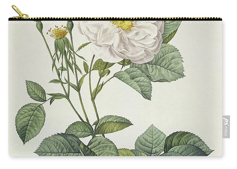 Rosa Carry-all Pouch featuring the drawing Rosa Alba Foliacea by Pierre Joseph Redoute