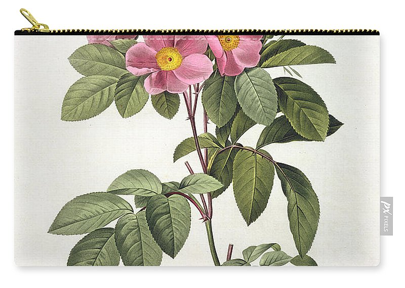 Rosa Carry-all Pouch featuring the drawing Rosa Carolina Corymbosa by Pierre Joseph Redoute