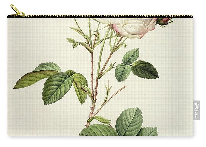 Rosa Carry-all Pouch featuring the drawing Rosa Centifolia Mutabilis by Pierre Joseph Redoute