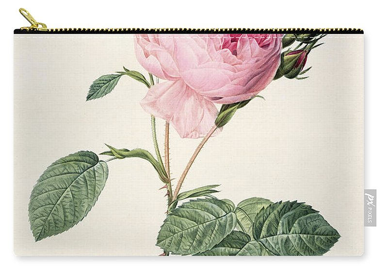 Rosa Carry-all Pouch featuring the drawing Rosa Centifolia by Pierre Joseph Redoute