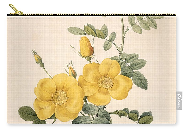 Rosa Carry-all Pouch featuring the drawing Rosa Eglanteria by Pierre Joseph Redoute