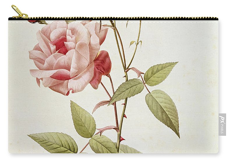 Rosa Carry-all Pouch featuring the painting Rosa Indica Vulgaris by Pierre Joseph Redoute