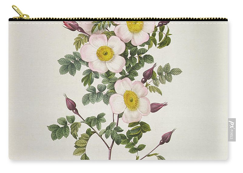 Rosa Carry-all Pouch featuring the drawing Rosa Pimpinelli Folia Inermis by Pierre Joseph Redoute