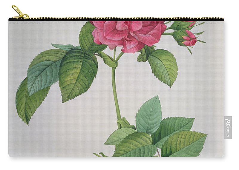 Rosa Carry-all Pouch featuring the drawing Rosa Turbinata by Pierre Joseph Redoute