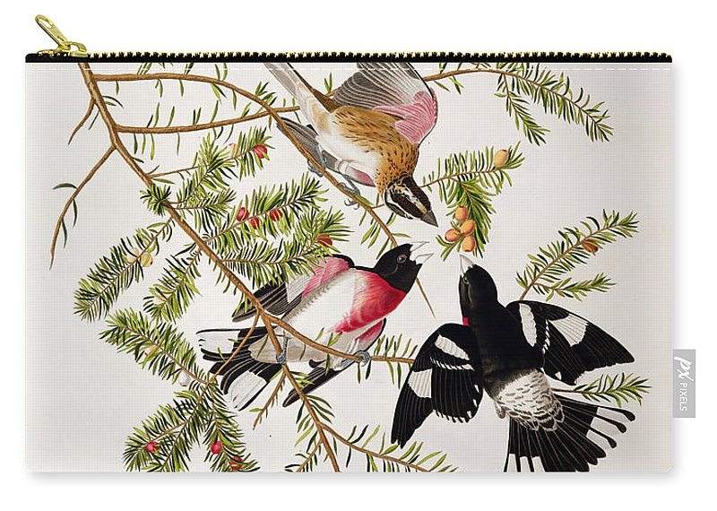Rose-breasted Grosbeak Carry-all Pouch featuring the drawing Rose Breasted Grosbeak by John James Audubon