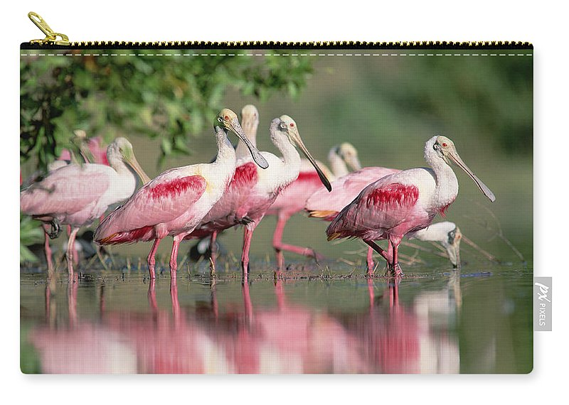 00171421 Carry-all Pouch featuring the photograph Roseate Spoonbill Flock Wading In Pond by Tim Fitzharris