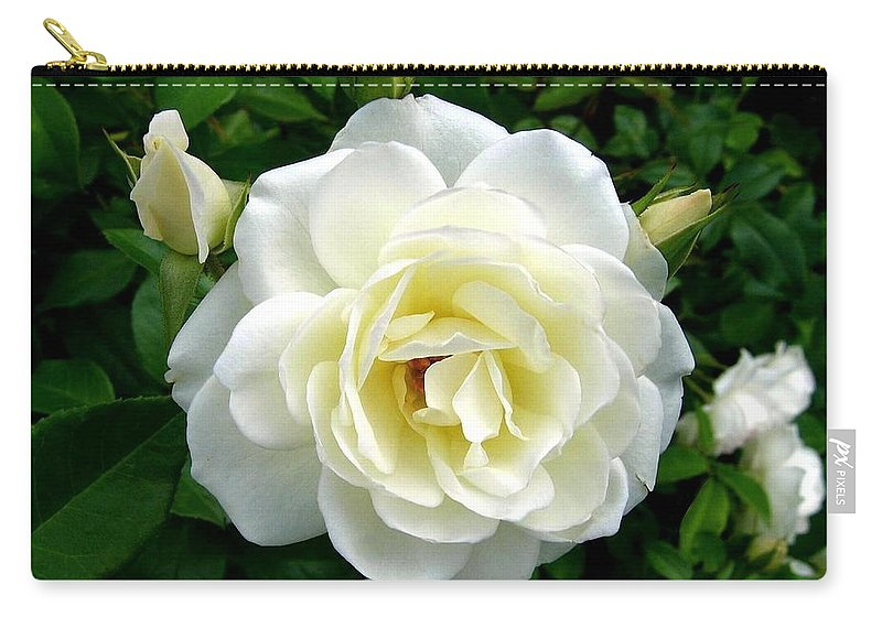 Rose Carry-all Pouch featuring the photograph Roses 2 by Will Borden