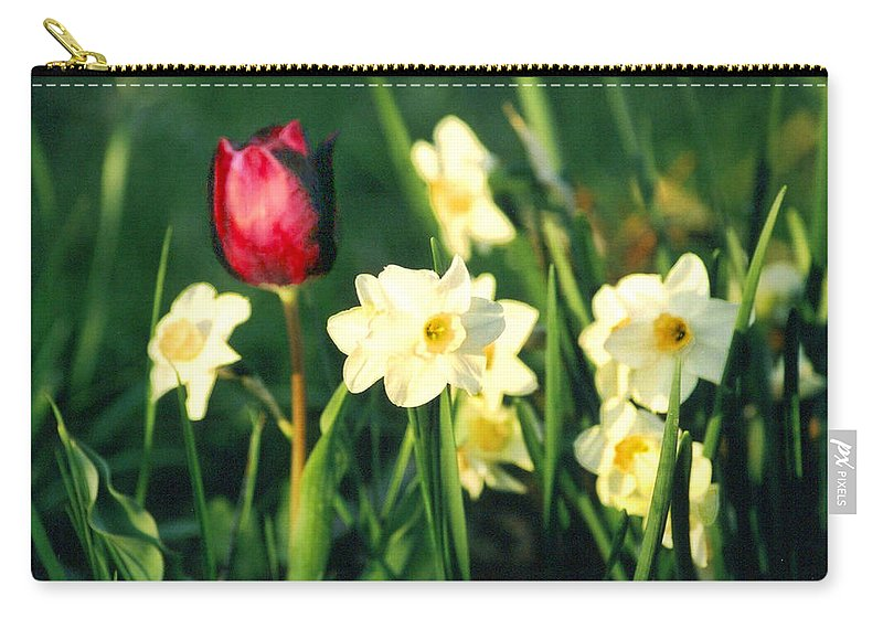 Tulips Carry-all Pouch featuring the photograph Royal Spring by Steve Karol