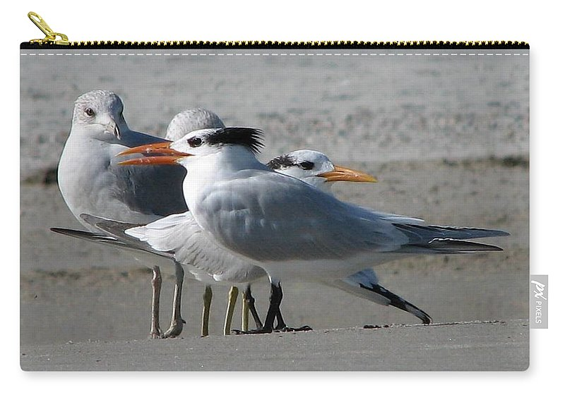 Royal Tern Carry-all Pouch featuring the photograph Royal Terns And Gulls by J M Farris Photography