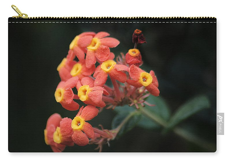 Flowers Carry-all Pouch featuring the photograph Rubiaceae by Michael Peychich