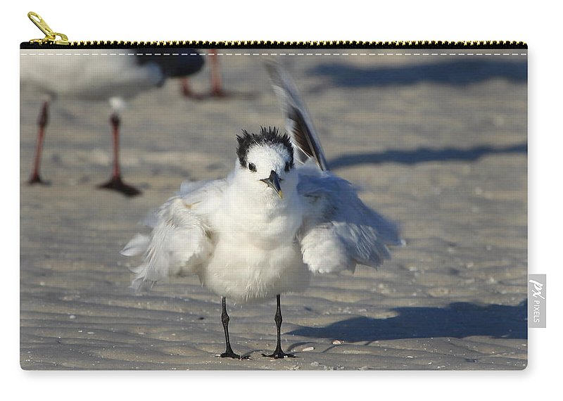 Gull Tern Carry-all Pouch featuring the photograph Ruffled Feathers by Barbara Bowen