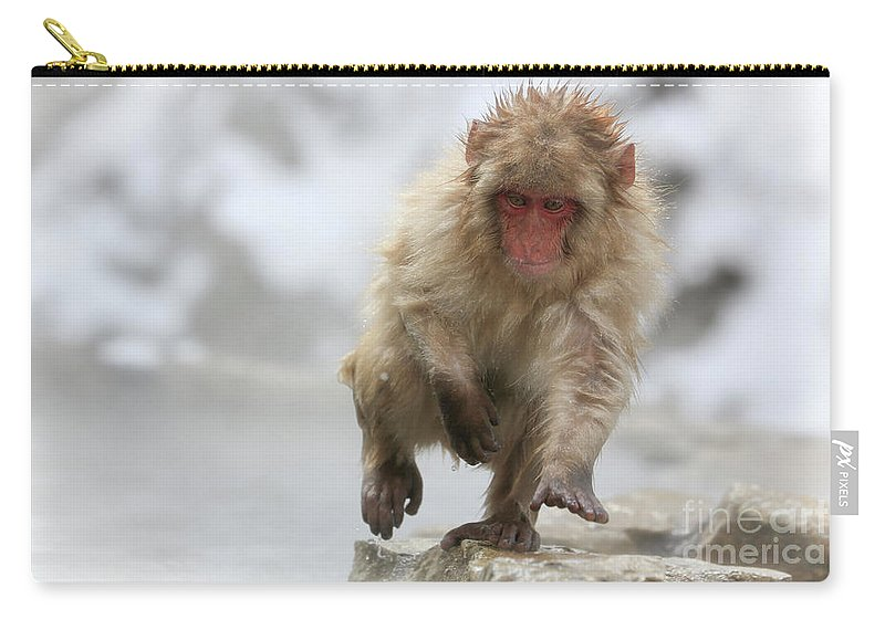 Snow Monkeys Carry-all Pouch featuring the photograph Running Fast by Leigh Lofgren