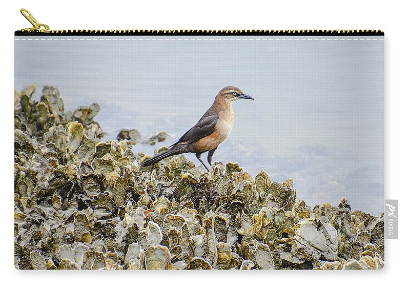 Avian Carry-all Pouch featuring the photograph Rusty Blackbird #6 by Tim Bond