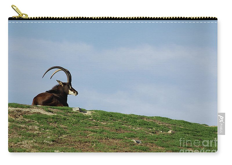 Sable Carry-all Pouch featuring the photograph Sable Antelope On Hill by Jim And Emily Bush