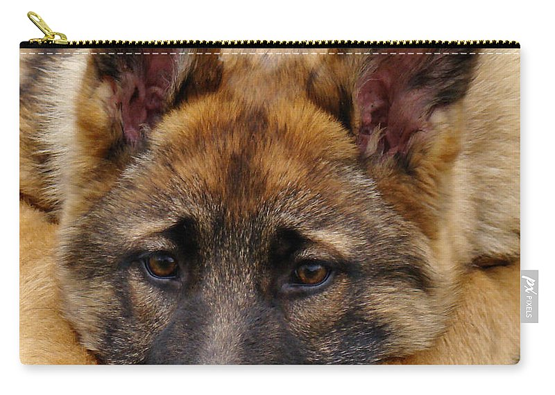 German Shepherd Carry-all Pouch featuring the photograph Sable German Shepherd Puppy by Sandy Keeton