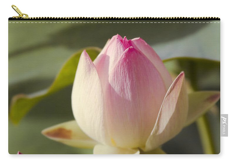 The Sacred Lotus Carry-all Pouch featuring the photograph Sacred Lotus - Nelumbo by Sharon Mau